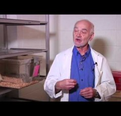 Human Brain Evolution – Jaak Panksepp